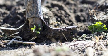 Plan a Survivalist Garden Part 2