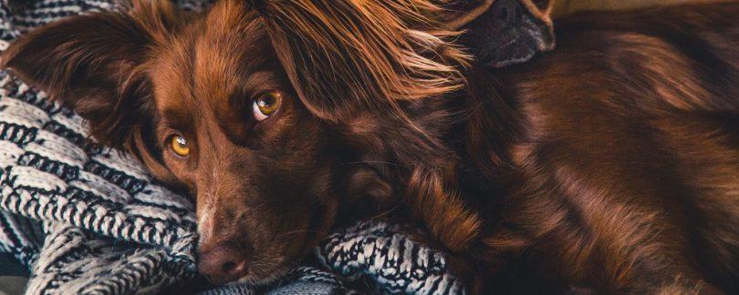 The Bayer Seresto Flea and Tick Collar Review