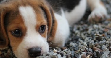 Where to Find Help for Pet Care and Pet Food